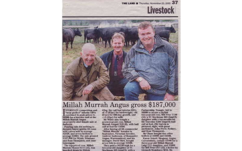 Cow Sale 2000