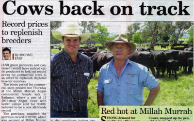 2005 Cow Sale Report