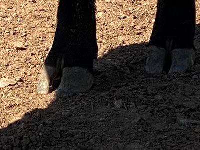 Quixote Q96 rear feet