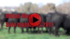 2011 Bull Sale Highlights
