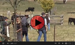 2013 Cow Sale Highlights