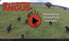 2014 Bull Sale Highlights