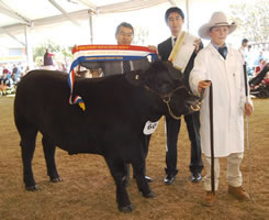 Champion Heavyweight steer & Carcase RAS Sydney 2008