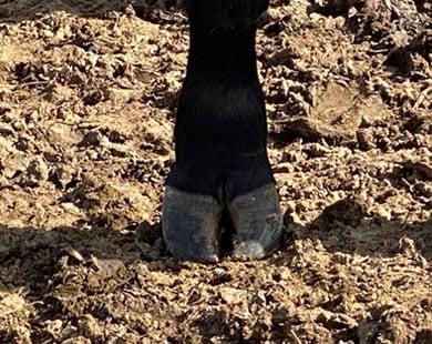 Quixote Q96 front feet